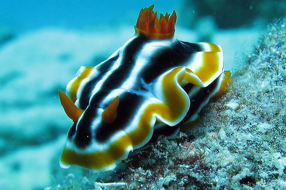 超級大堡礁_圖1-20