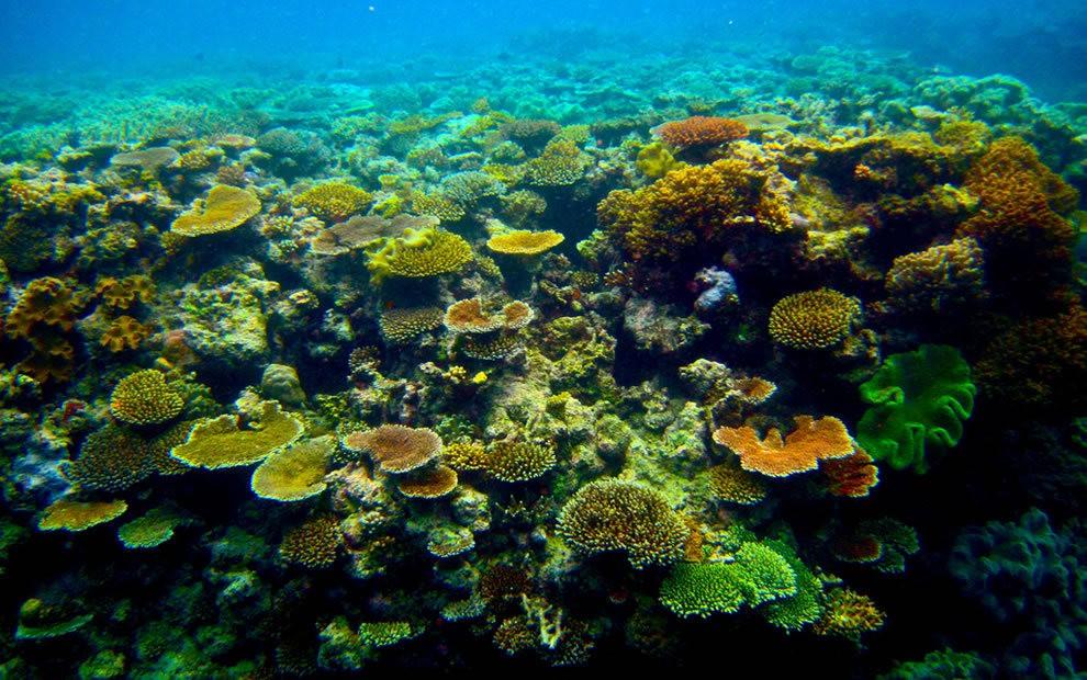 超級大堡礁_圖1-23