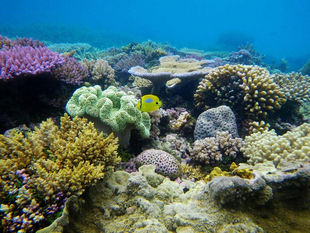 超級大堡礁_圖1-27