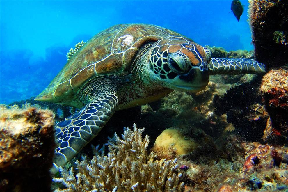 超級大堡礁_圖1-29
