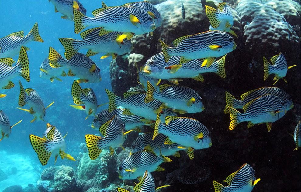 超級大堡礁_圖1-17