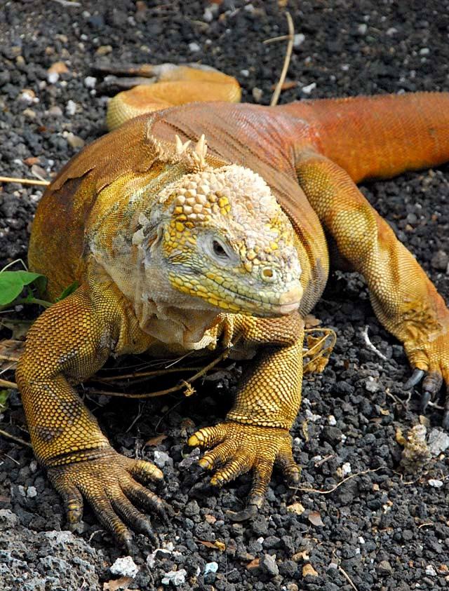 加拉帕戈斯群岛---厄瓜多尔的世界文化遗产_图1-2