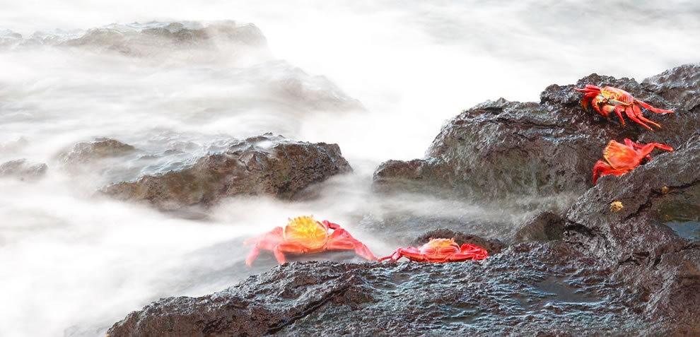 加拉帕戈斯群岛---厄瓜多尔的世界文化遗产_图1-4