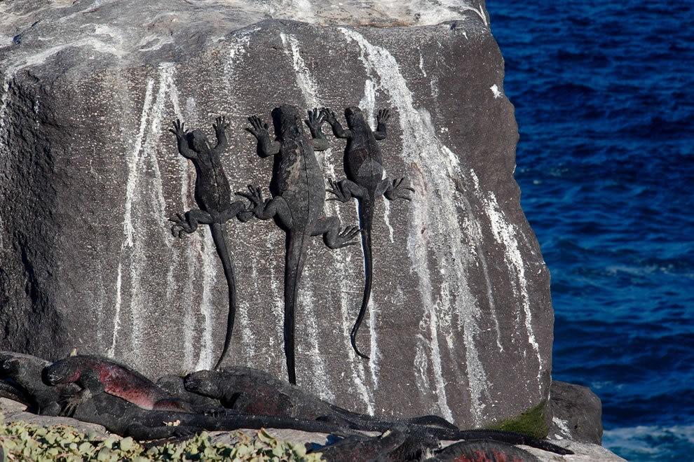 加拉帕戈斯群岛---厄瓜多尔的世界文化遗产_图1-20