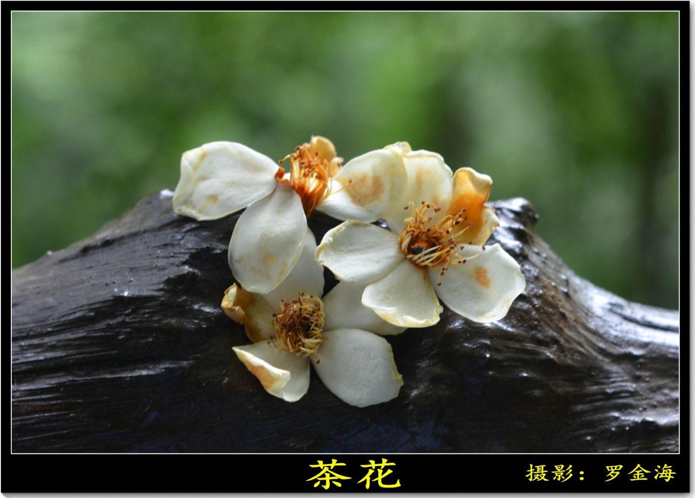 生命之爱(散文)_图1-1