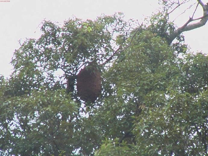 广西8名村民路遇黄蜂群被蜇:3人死亡5人受伤,大家要远离危险! ..._图1-2