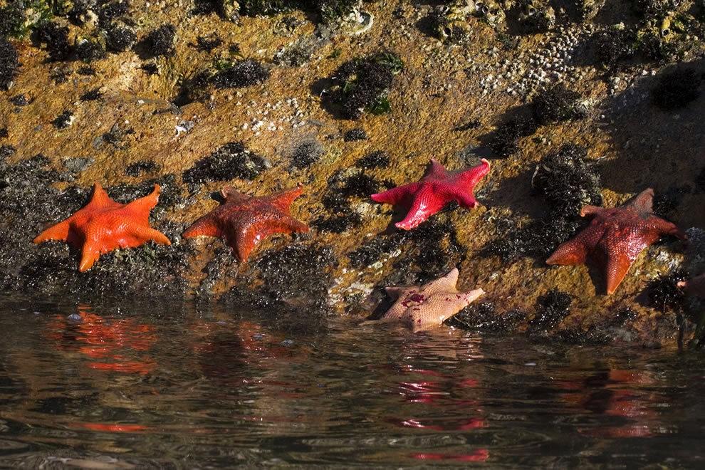 麦基里奇州立公园之----玻璃海滩_图1-10