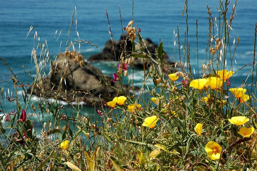 麦基里奇州立公园之----玻璃海滩_图1-12