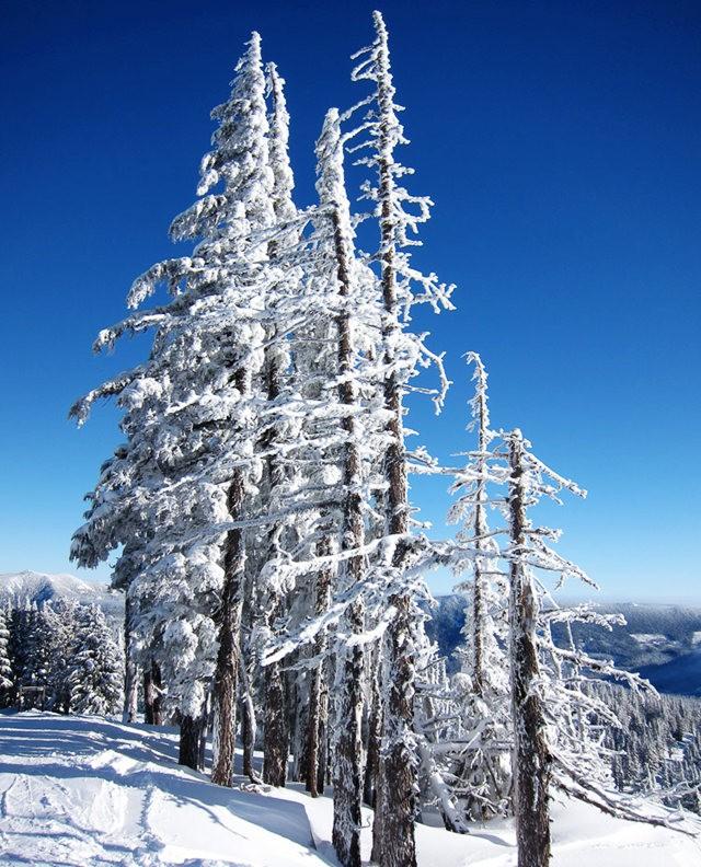 冬在胡德山_图1-13