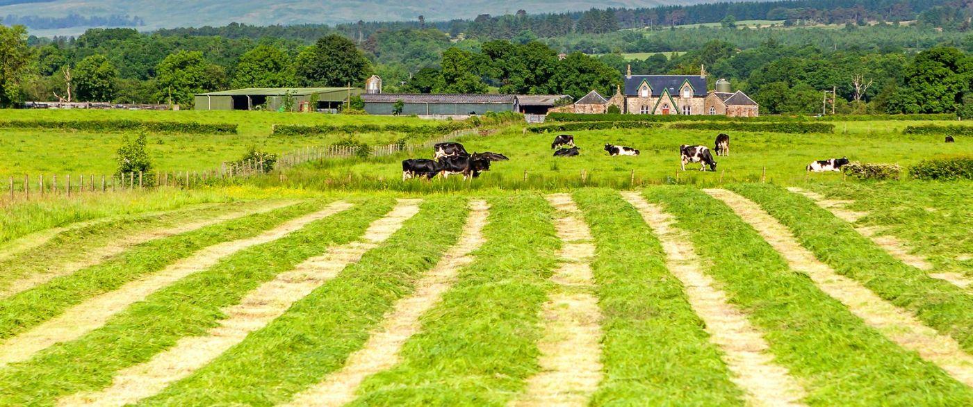 苏格兰见闻,咱家的牛羊_图1-37