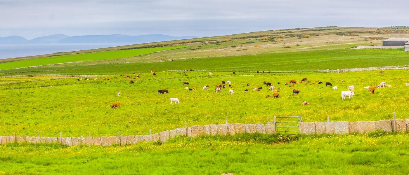 苏格兰见闻,咱家的牛羊_图1-38