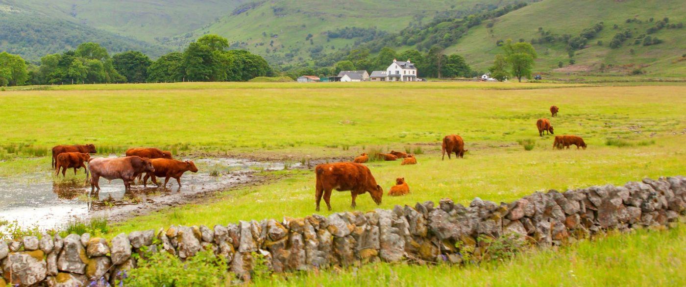 苏格兰见闻,咱家的牛羊_图1-34