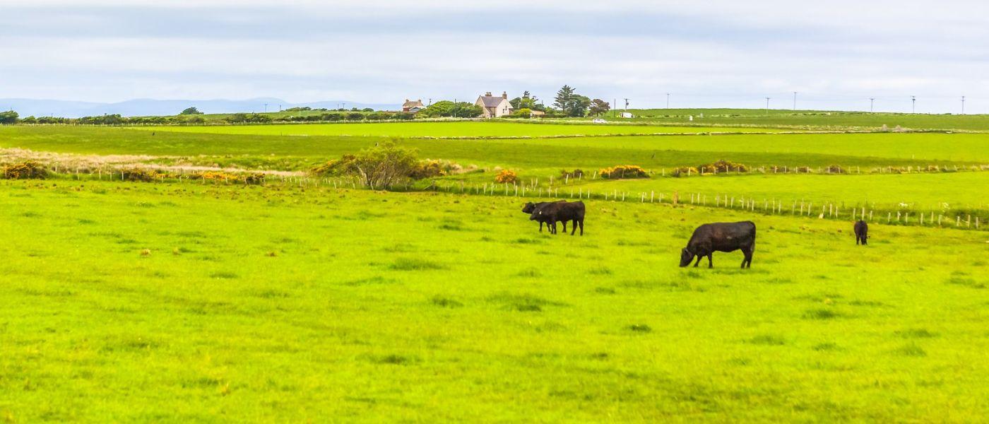 苏格兰见闻,咱家的牛羊_图1-36