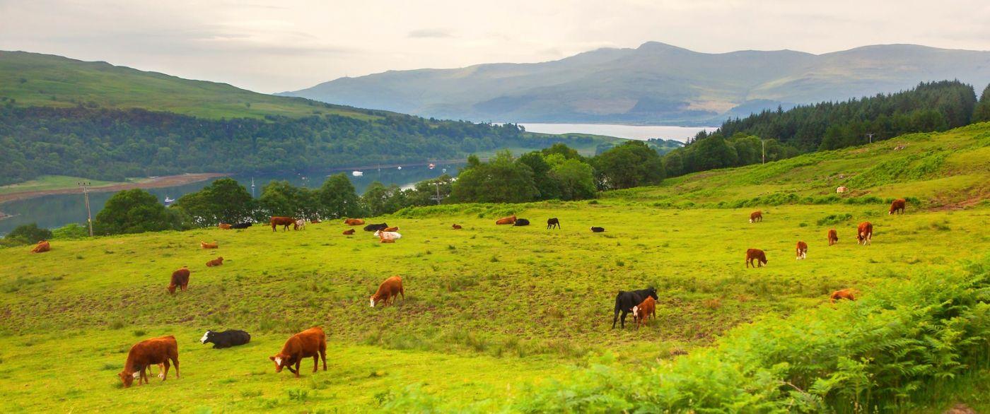 苏格兰见闻,咱家的牛羊_图1-35