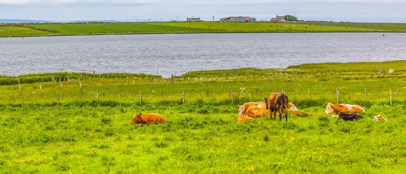 苏格兰见闻,咱家的牛羊_图1-30