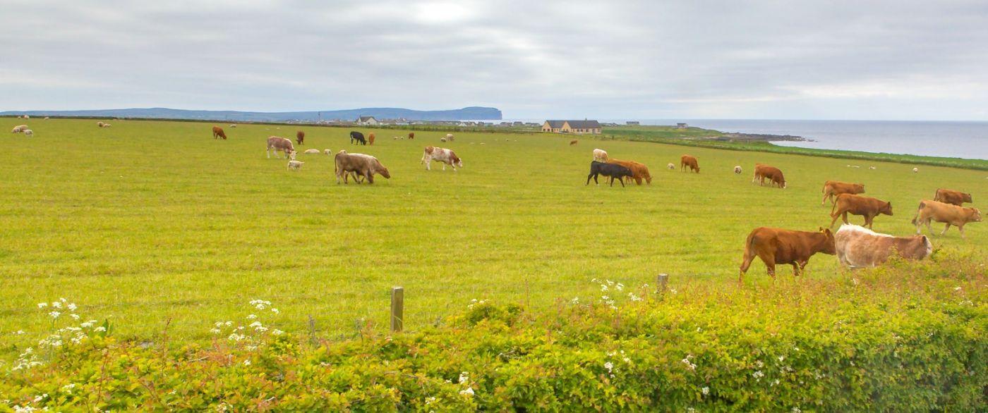 苏格兰见闻,咱家的牛羊_图1-29