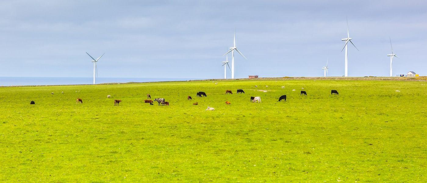苏格兰见闻,咱家的牛羊_图1-25