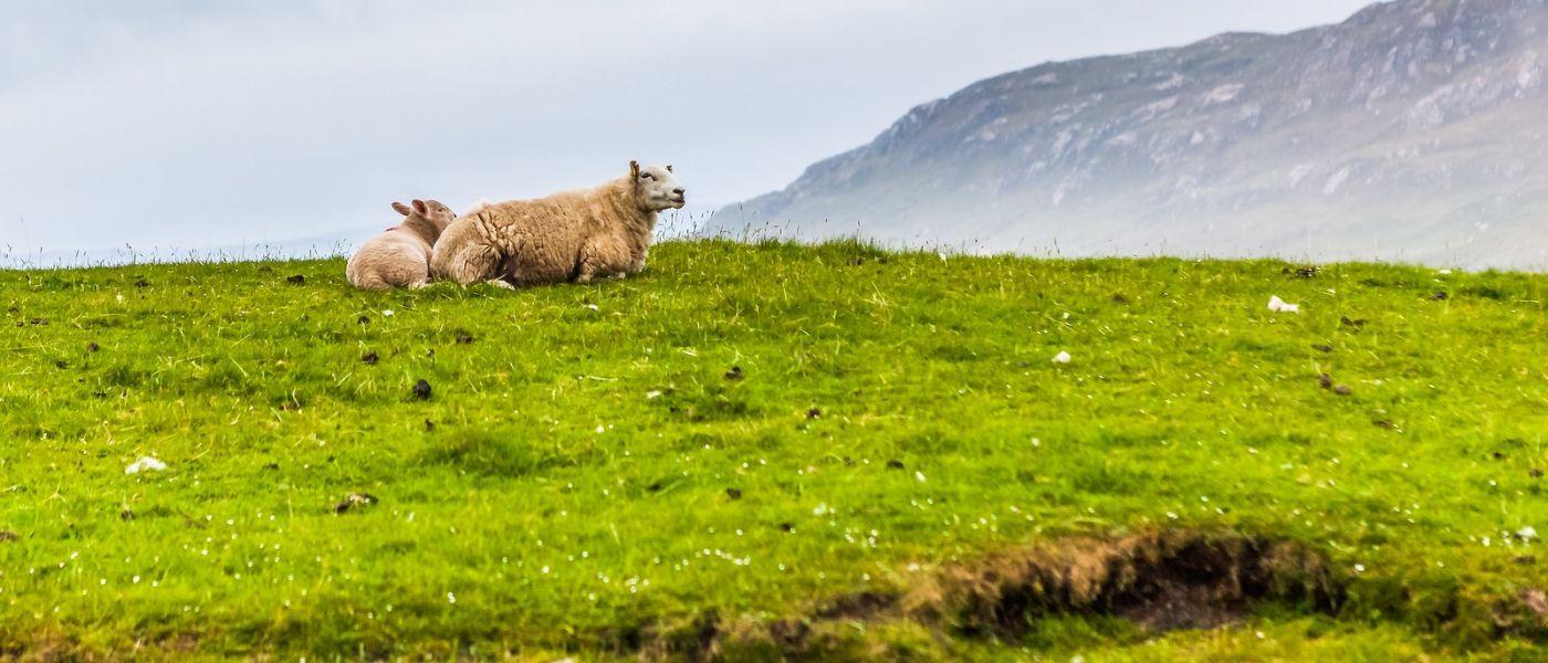 苏格兰见闻,咱家的牛羊_图1-26