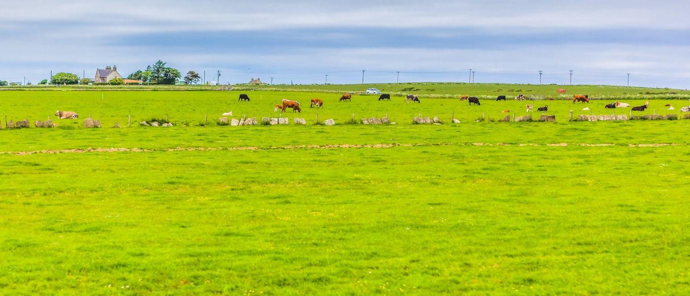 苏格兰见闻,咱家的牛羊_图1-27