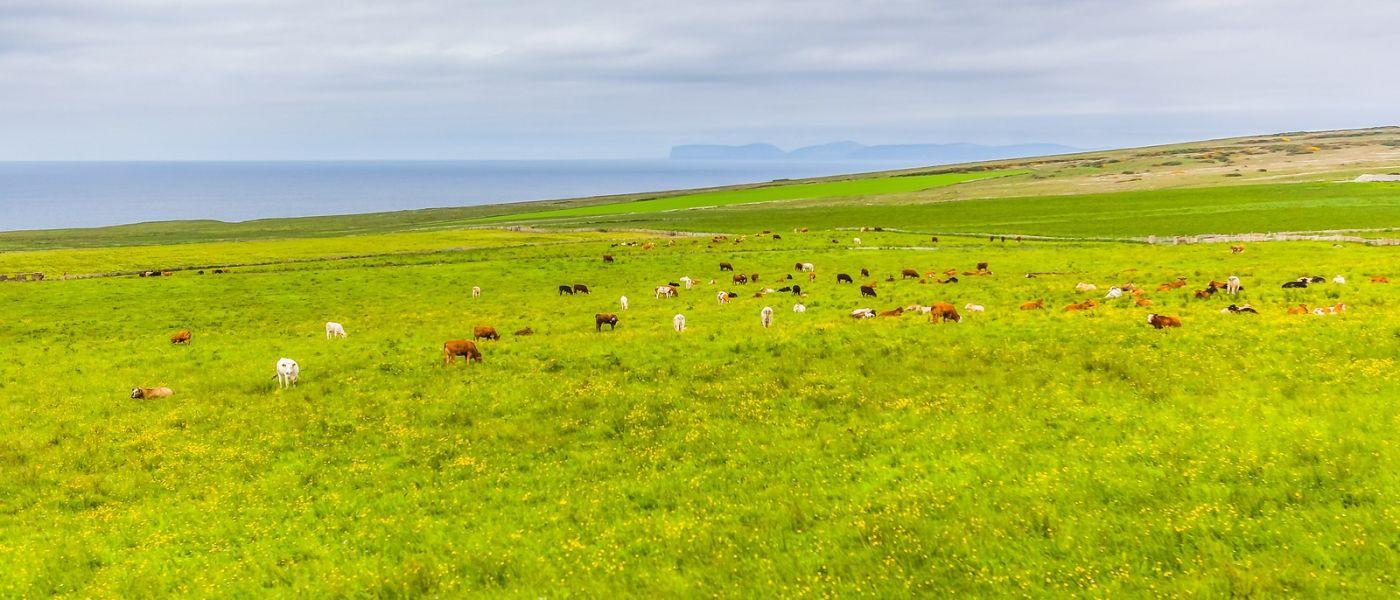 苏格兰见闻,咱家的牛羊_图1-22