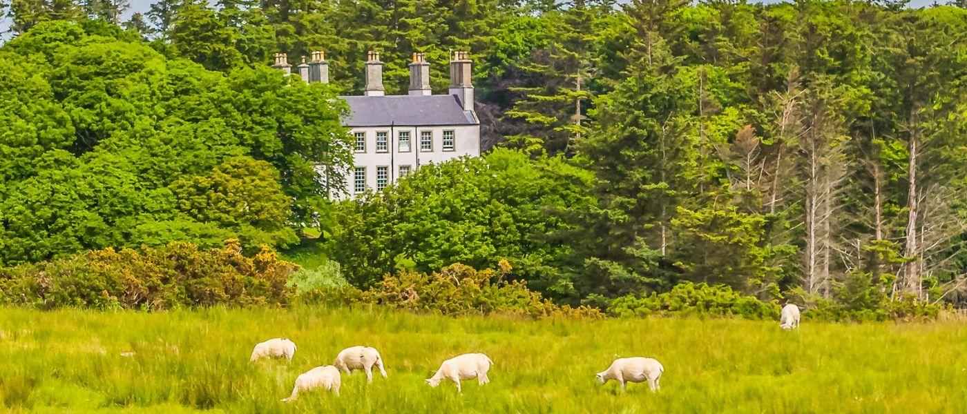 苏格兰见闻,咱家的牛羊_图1-6