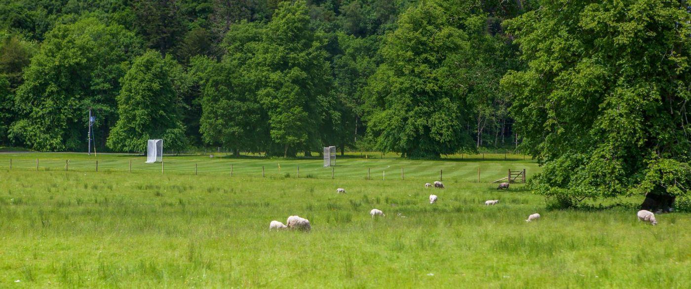 苏格兰见闻,咱家的牛羊_图1-8