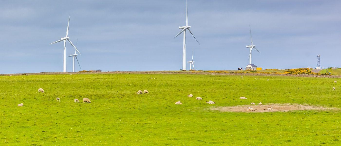 苏格兰见闻,咱家的牛羊_图1-9