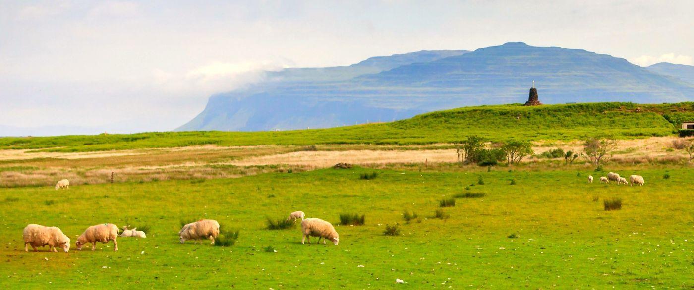 苏格兰见闻,咱家的牛羊_图1-16
