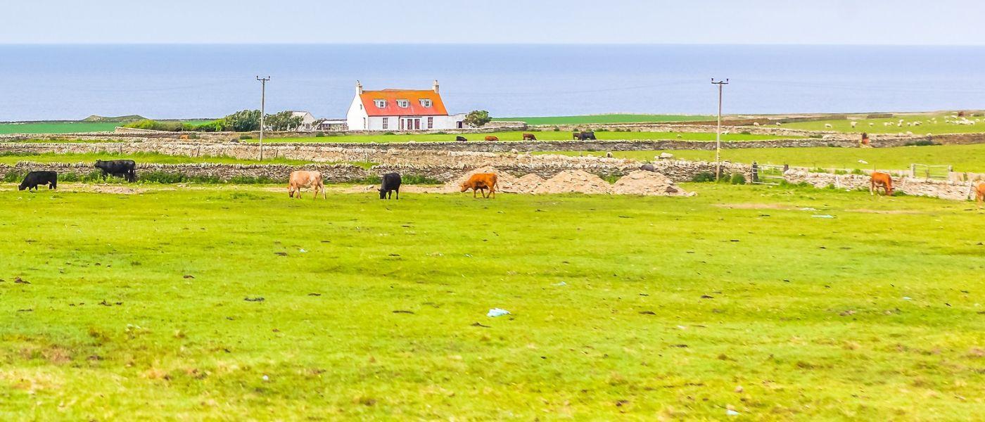苏格兰见闻,咱家的牛羊_图1-14