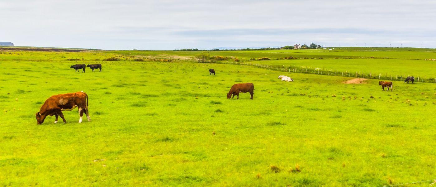 苏格兰见闻,咱家的牛羊_图1-18