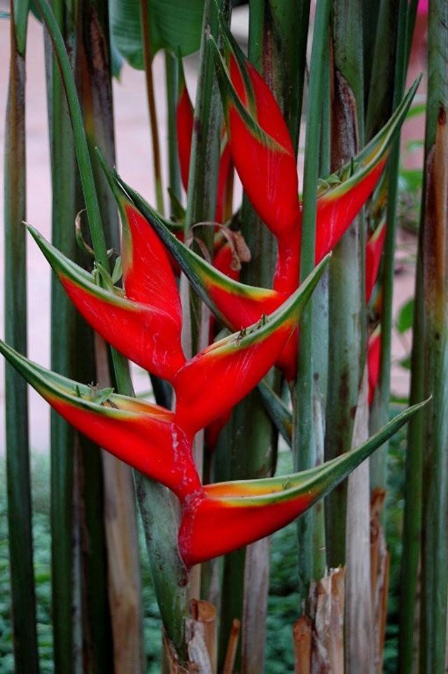 大自然的红色_图1-7