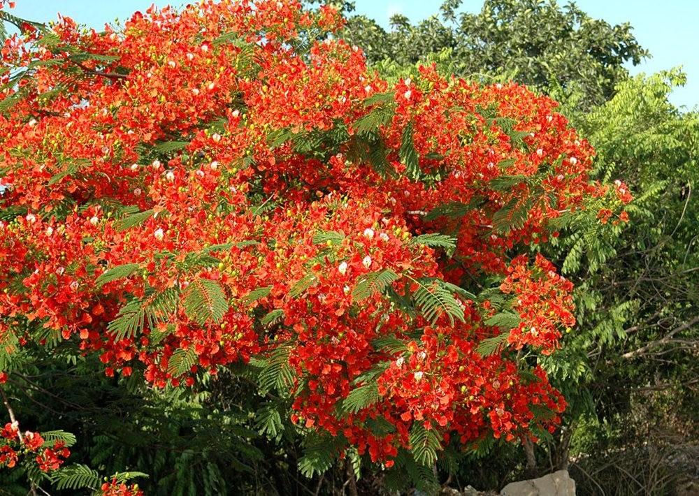 大自然的红色_图1-11
