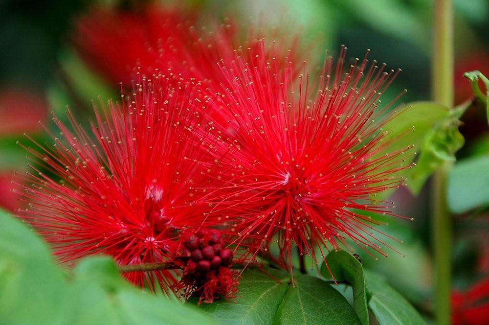 大自然的红色_图1-22