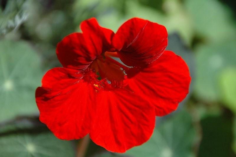 大自然的红色_图1-25