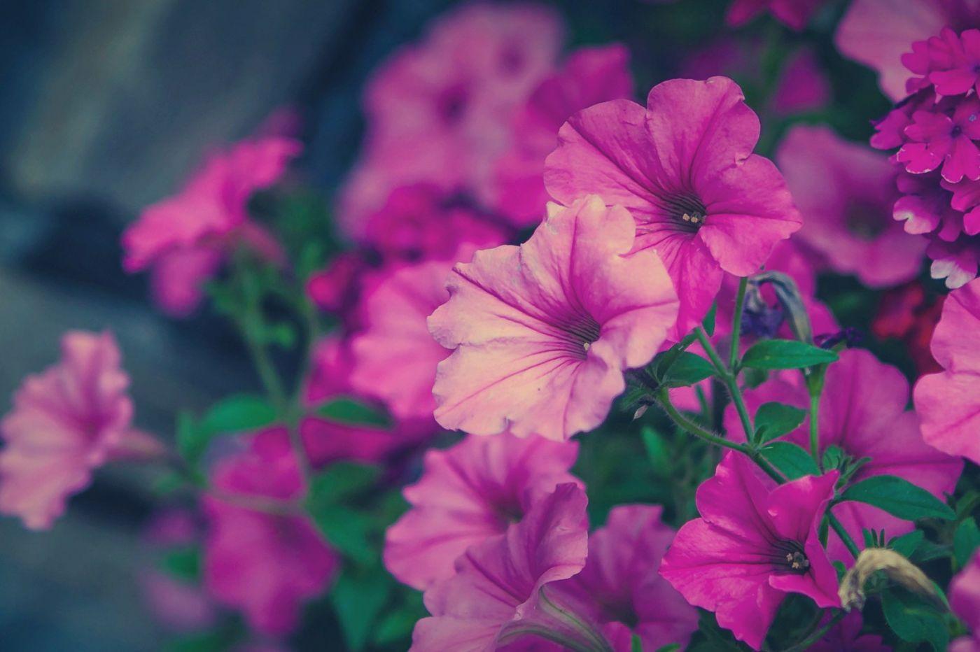 花儿你为什么这么美_图1-24