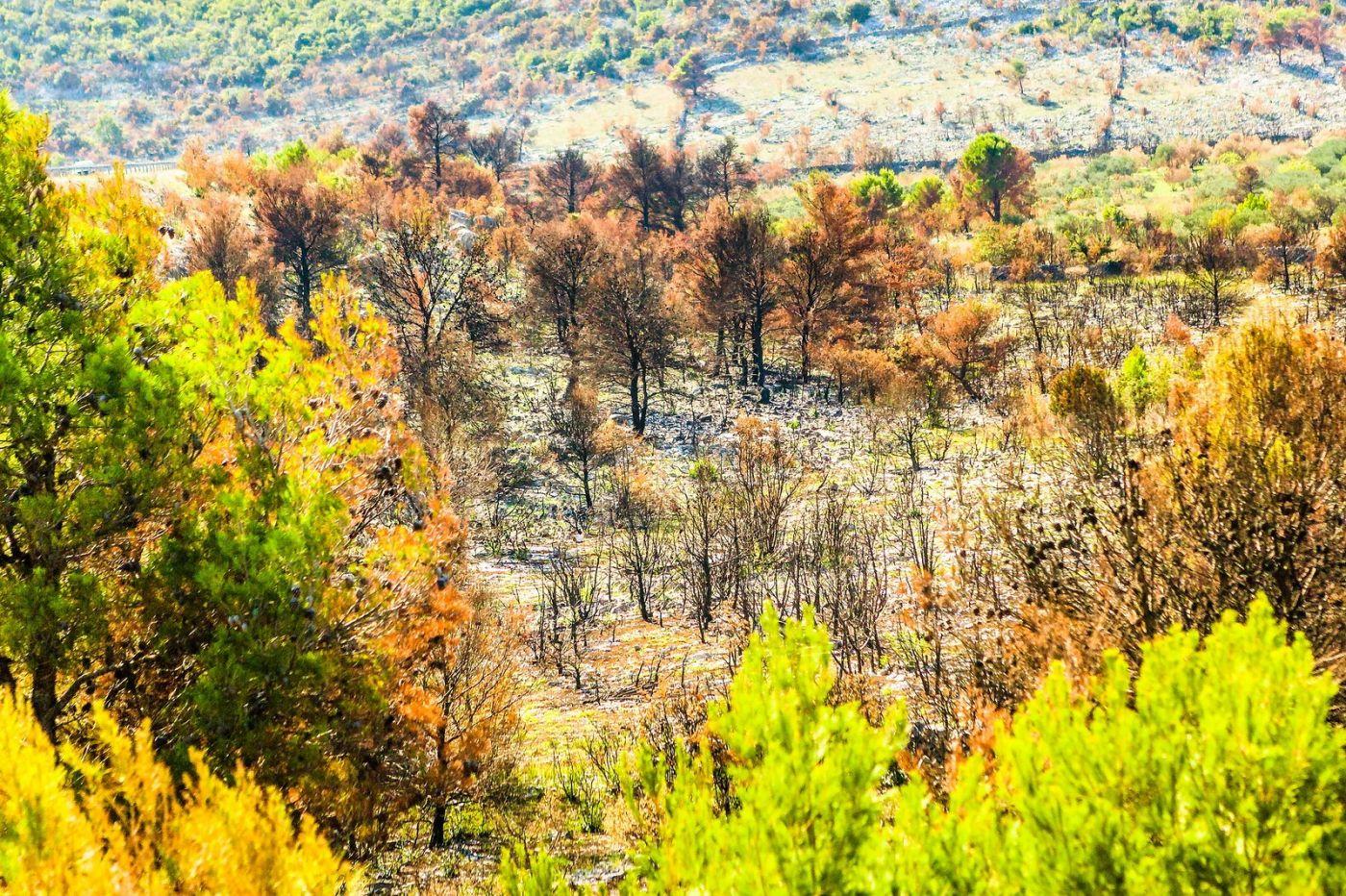 克罗地亚旅途,沿路的秋色_图1-9