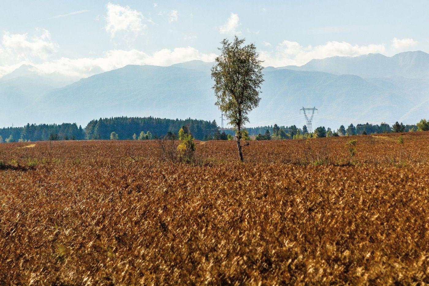 克罗地亚旅途,沿路的秋色_图1-2