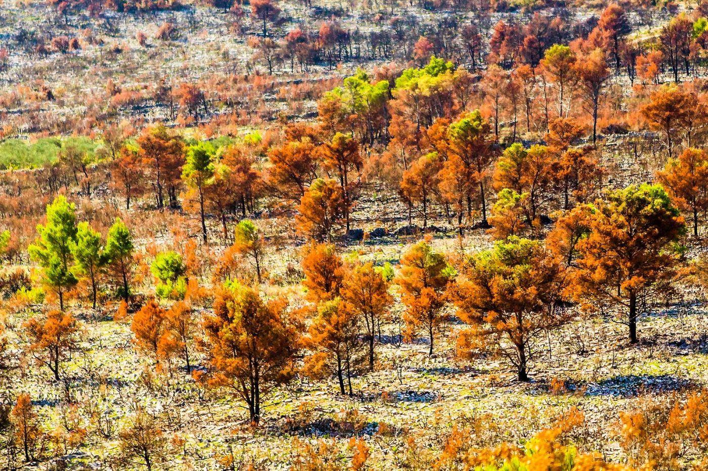 克罗地亚旅途,沿路的秋色_图1-33