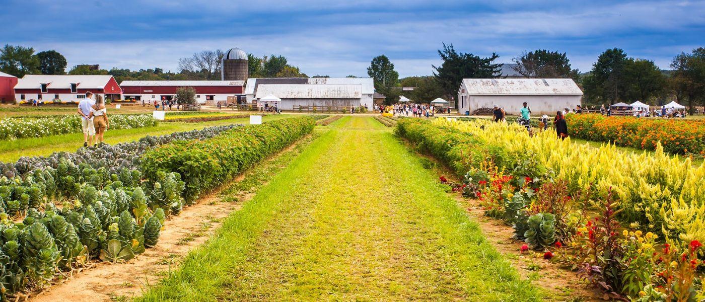 荷兰岭农场(Holland Ridge Farms, NJ),层层叠叠的花蕾_图1-20