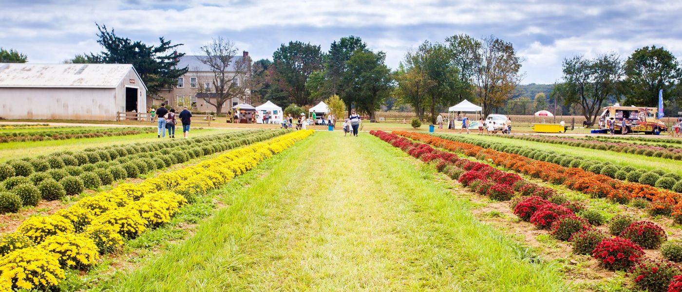 荷兰岭农场(Holland Ridge Farms, NJ),层层叠叠的花蕾_图1-10