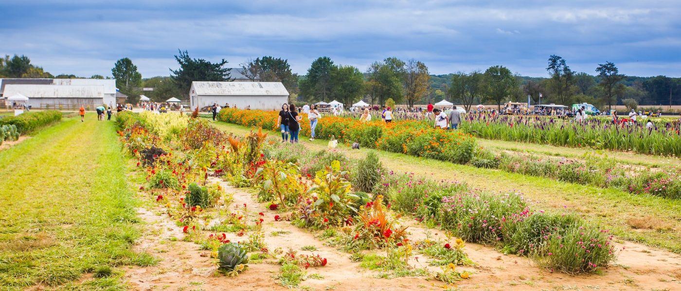 荷兰岭农场(Holland Ridge Farms, NJ),层层叠叠的花蕾_图1-12