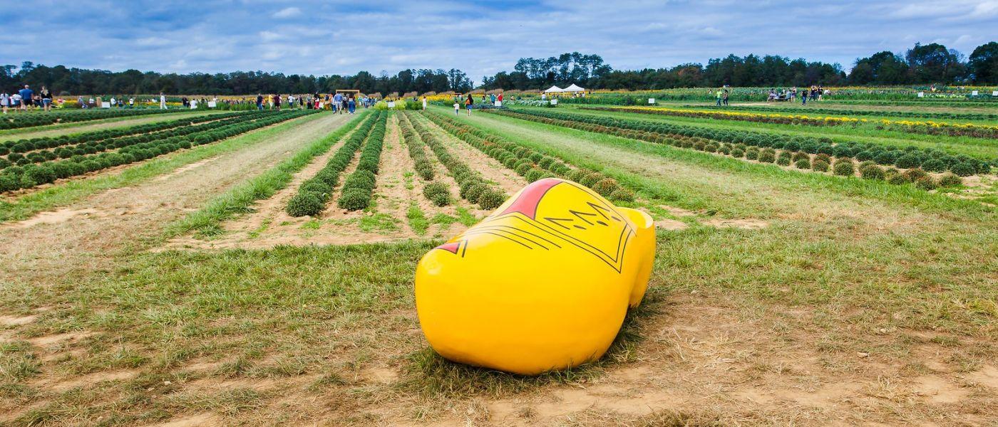 荷兰岭农场(Holland Ridge Farms, NJ),层层叠叠的花蕾_图1-1