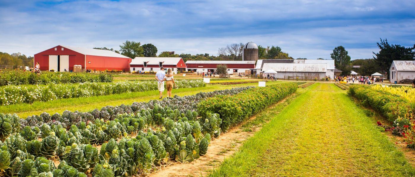 荷兰岭农场(Holland Ridge Farms, NJ),层层叠叠的花蕾_图1-40
