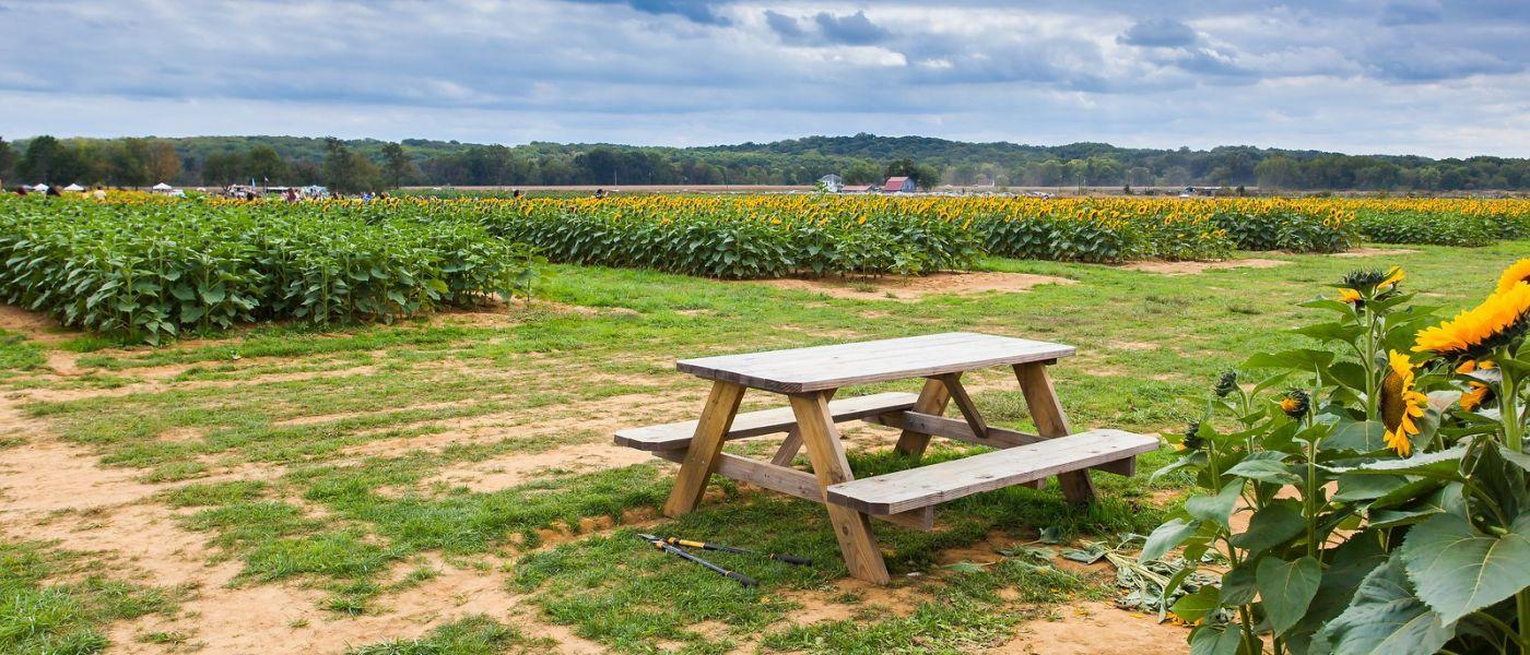 荷兰岭农场(Holland Ridge Farms, NJ),层层叠叠的花蕾_图1-37