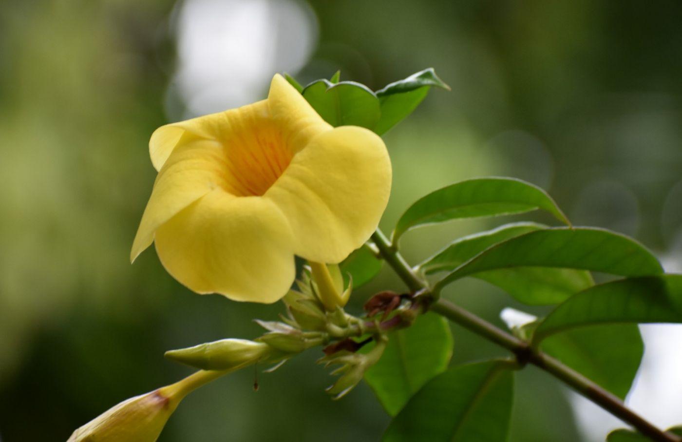 黄蝉和白蝉_图1-3