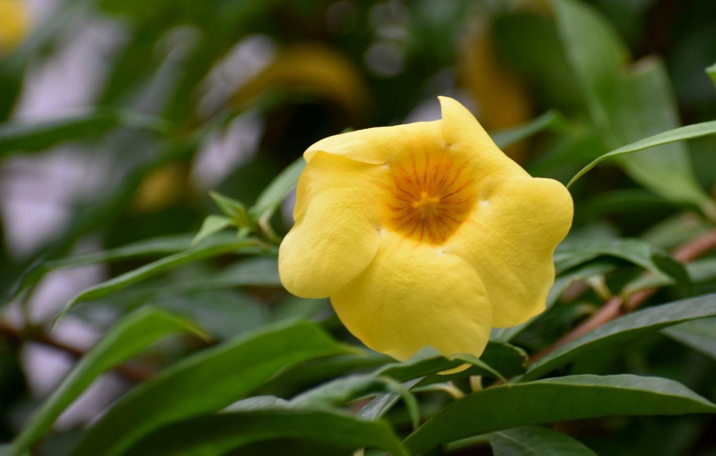 黄蝉和白蝉_图1-4