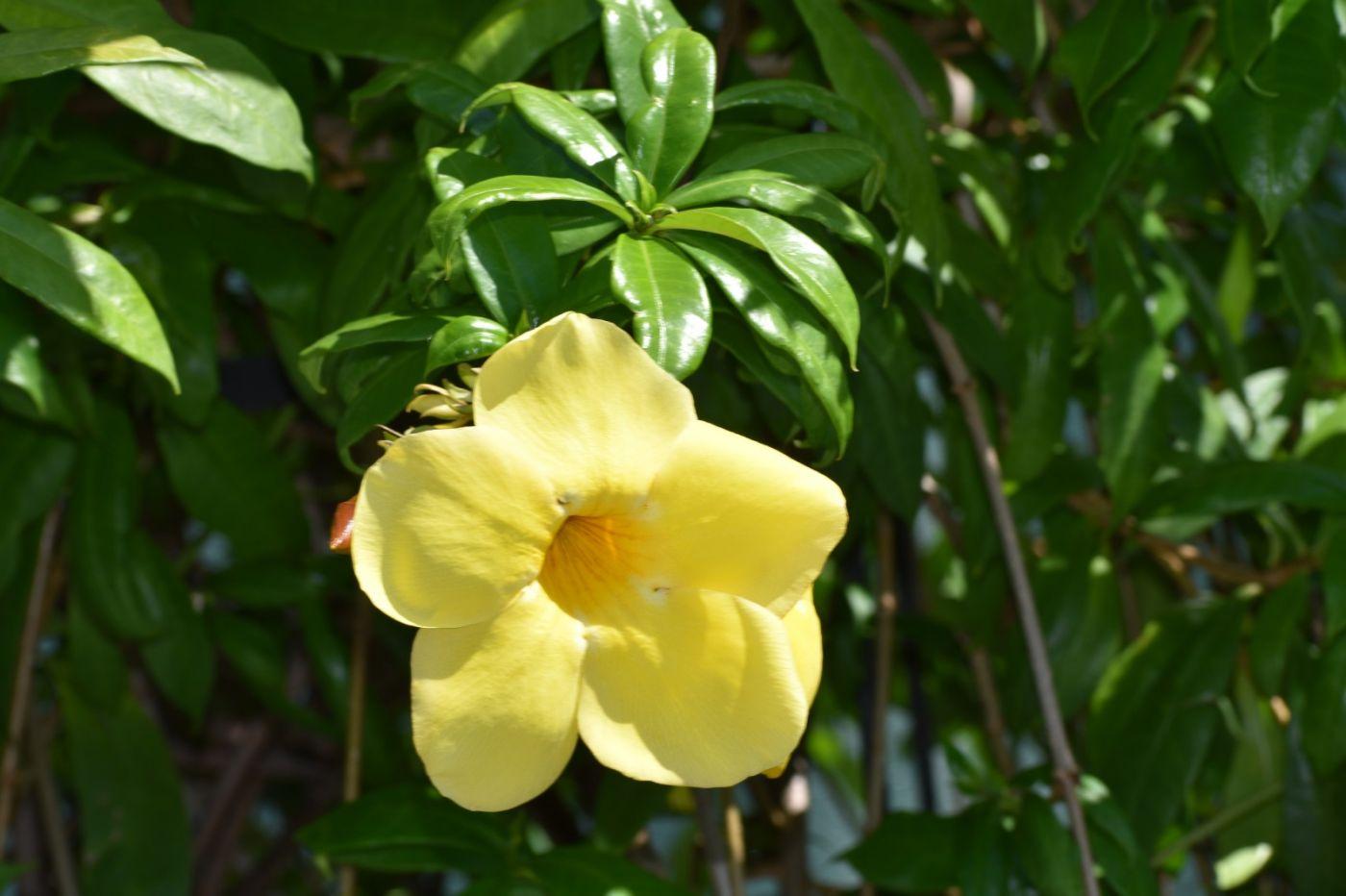 黄蝉和白蝉_图1-5