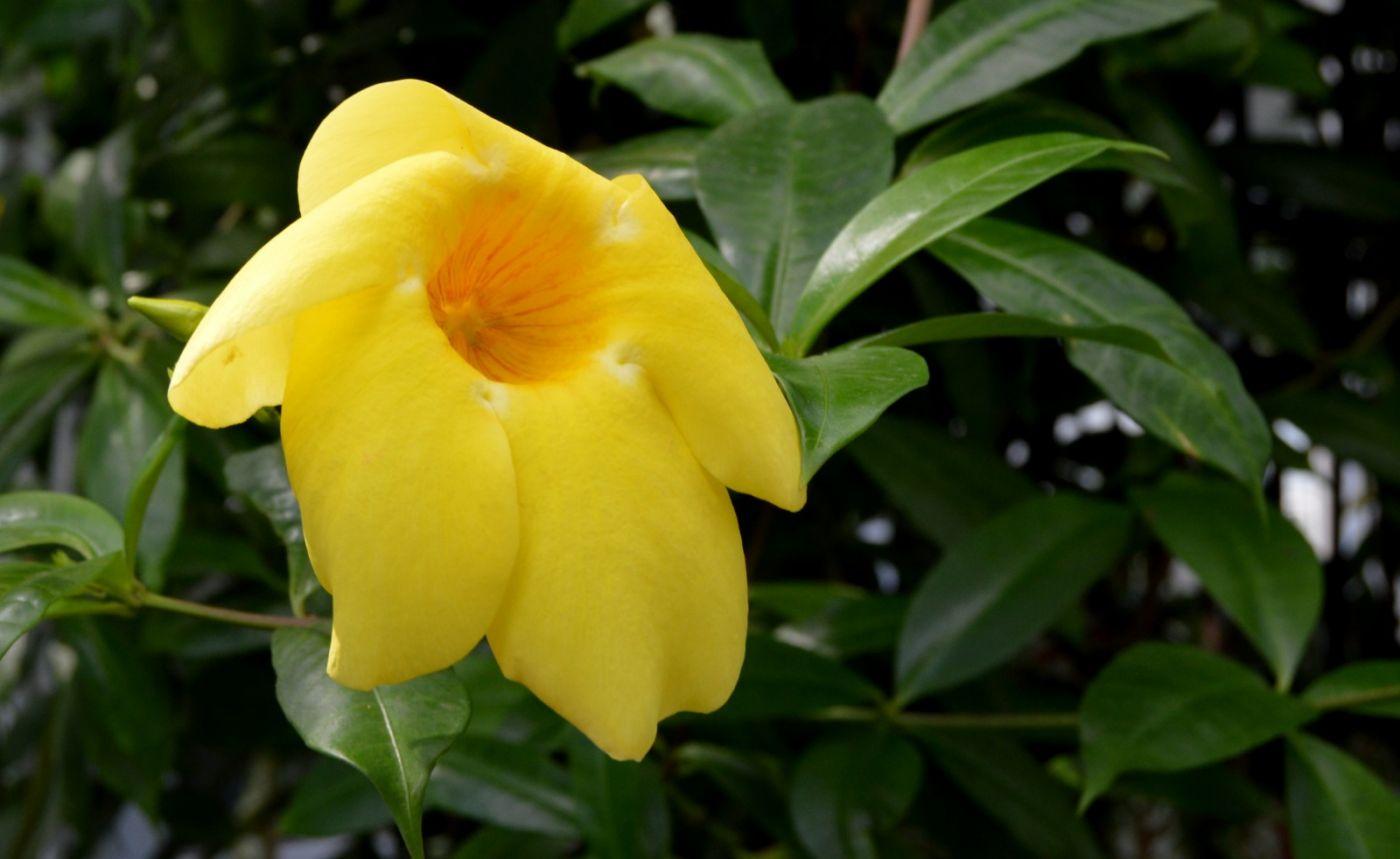 黄蝉和白蝉_图1-7