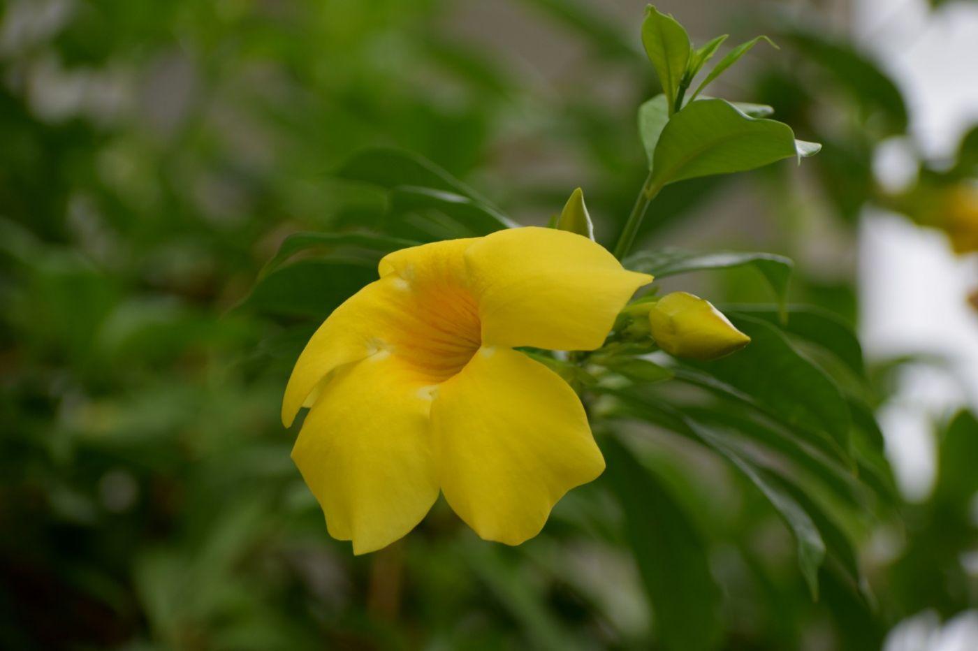 黄蝉和白蝉_图1-8