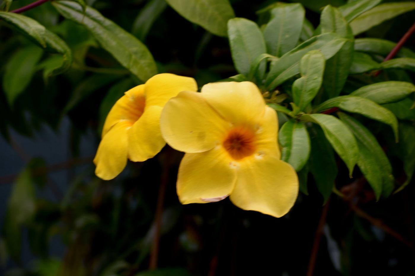 黄蝉和白蝉_图1-9